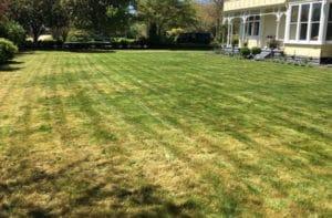 lawn-3-1