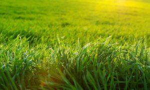Grass1 1024x617 1