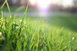Grass3 1024x683 1